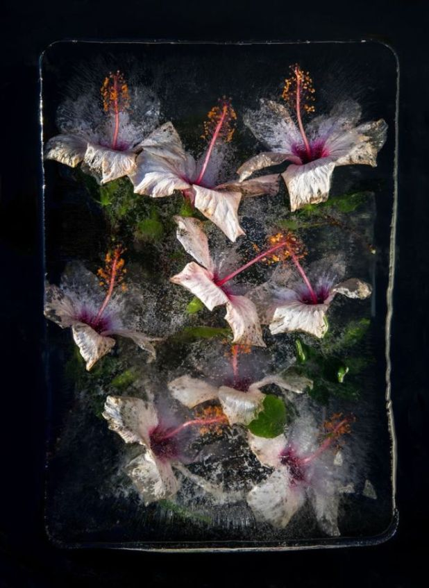 16 Beautiful Flowers Captured Frozen In Ice