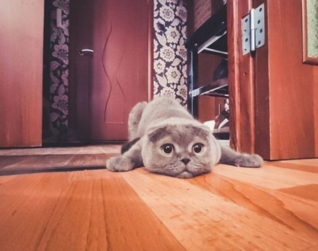 15 Hilarious Things Only Cat Owners Face