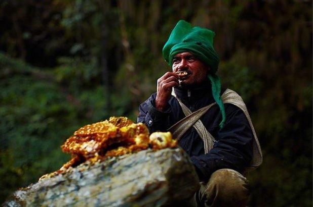 Meet The Honey Hunters Of Asia