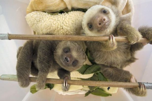 Cute Adorable Animals To Make You Smile All Day