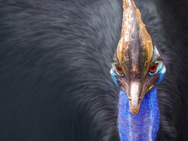 15 Most Dangerous Creatures On The Earth