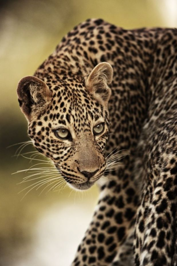 Amazing Wildlife Pictures With A Fascinating Story