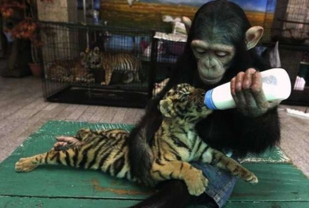 These Kind Animals Have A Really Big Heart