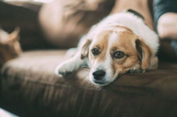 7 Health Benefits Of Having A Pet Dog