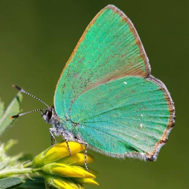 Adam Gor Takes Marvelous Macro Photos Of Butterflies