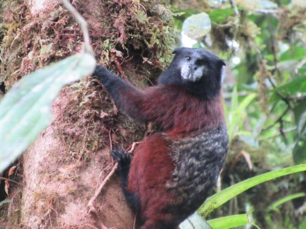 Crazy Animals Found In South America