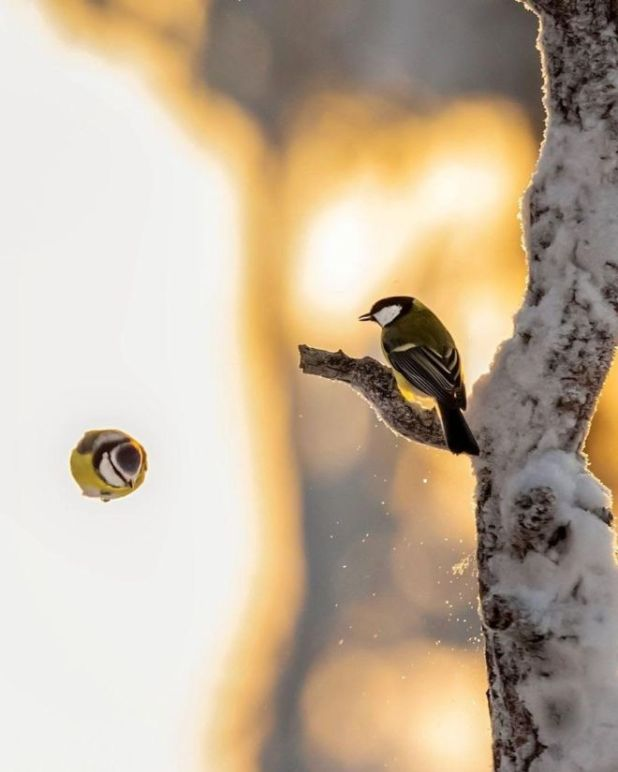 Real Life Angry Birds Photography