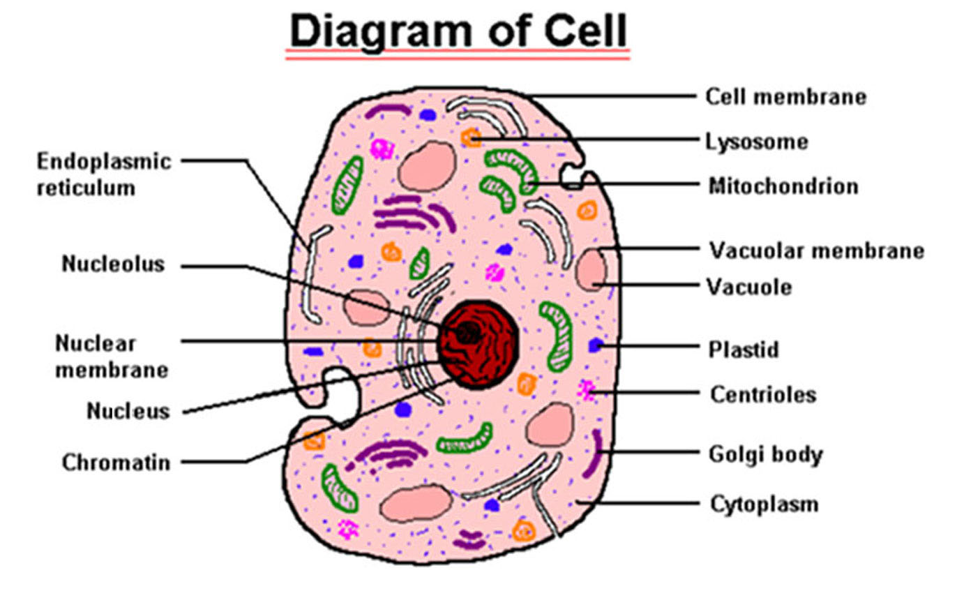 human cell parts labeled best picture collection