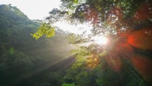 太陽が注ぎ込むイメージ画像