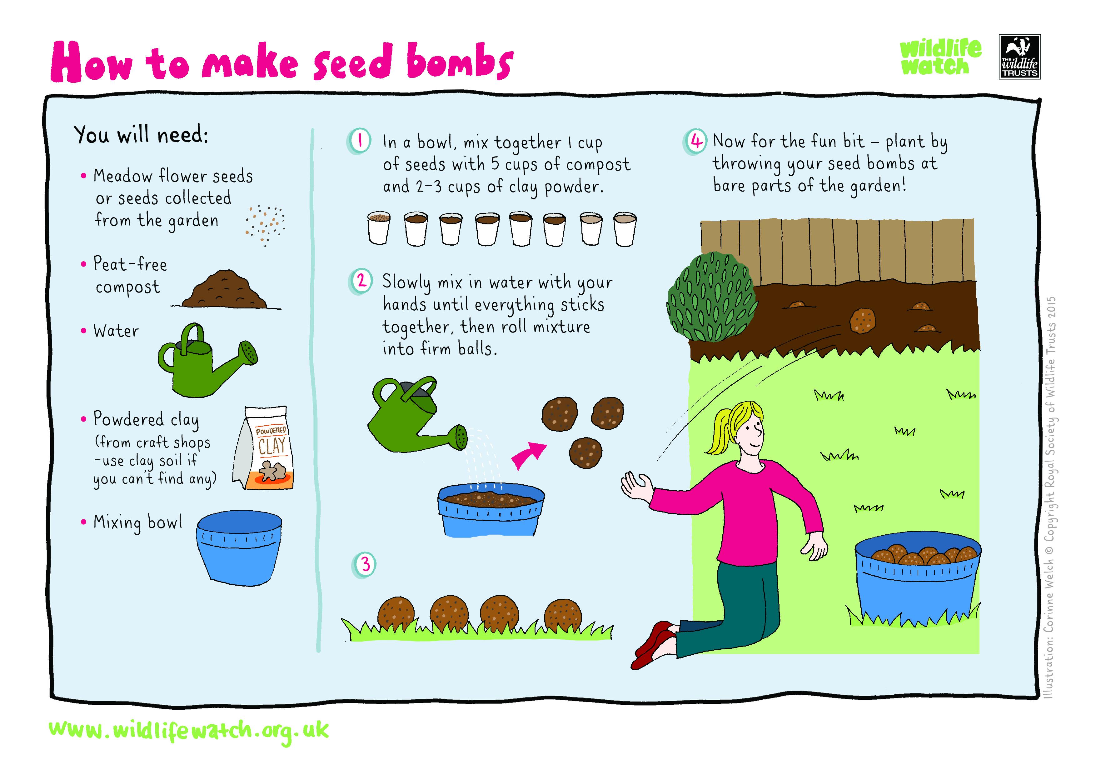 Vegetable Seed Worksheet