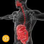 Gastroenterology and Hepatology Board Review
