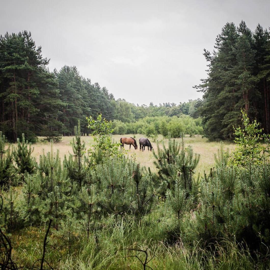 Wild horses, Bielefeld-Senne. .#photooftheday #nikon #fujix100t #photography #colorphotography #landscape #landscapephotography #nature #forest #trees #herbst #autumn #Bielefeld #ostwestfalen #liebefeld #landschaft #landschaftsfotografie #naturephotography #naturfotografie #bäume #fog #mystic #mysticphotography #breathe #goodmorning #horses #wildhorses #pferde # (hier: Senne, Nordrhein-Westfalen, Germany)