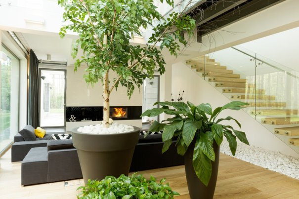 01aa1833 Using the right plants can reduce indoor pollu… – Ecology