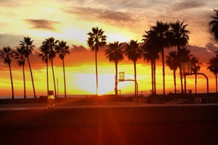 Venice Beach Paddle Spots California Tumblr Backgrounds Collection Palm Trees Background