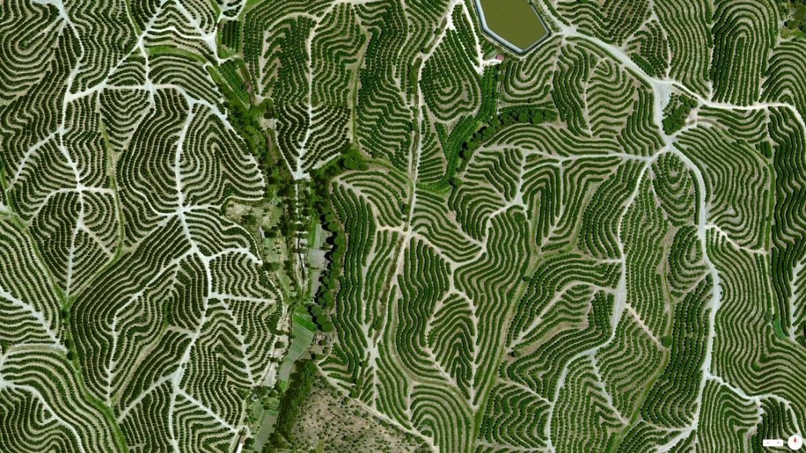 Vineyards Huelva, Spain 37°42′12″N 6°36′10″W