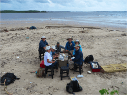 Here are blog updates on a shorebird research trip to Brazil that I took part in. http://arubewithaview.com/2014/03/10/maranhao-lost-and-found/