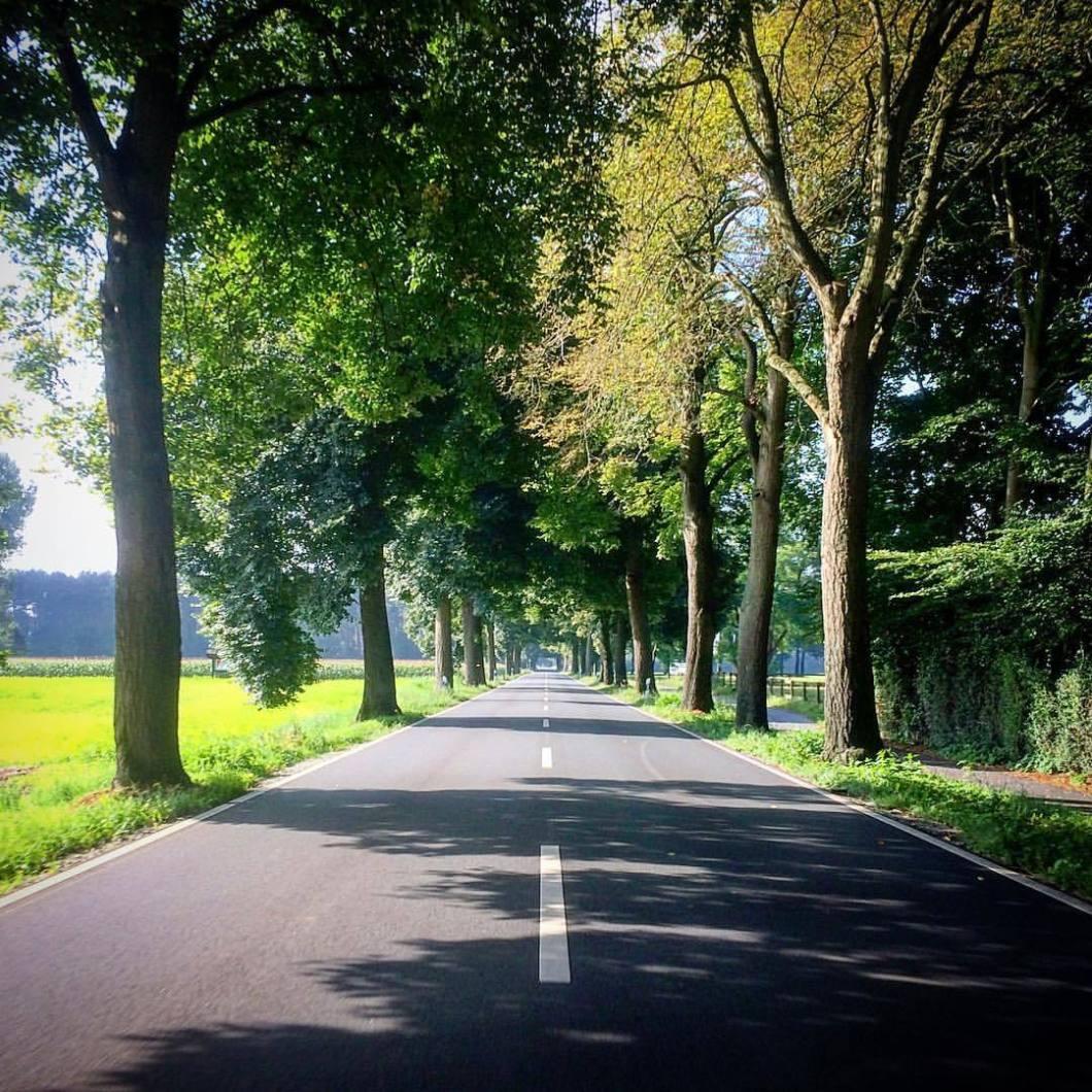 Allee, Bielefeld-Gütersloh 2017..#photooftheday #onephotoaday #iphoneonly #iphonography #iphonephotographie #photography #shotoniphone #colorphotography #streetphotography #landscape #landscapephotography #nature #forest #park #trees #herbst #autumn #Bielefeld #ostwestfalen #liebefeld #sunshine #landschaft #landschaftsfotografie #naturephotography #naturfotografie #street #alley #allee #trees #bäume (hier: Gütersloh, Germany)