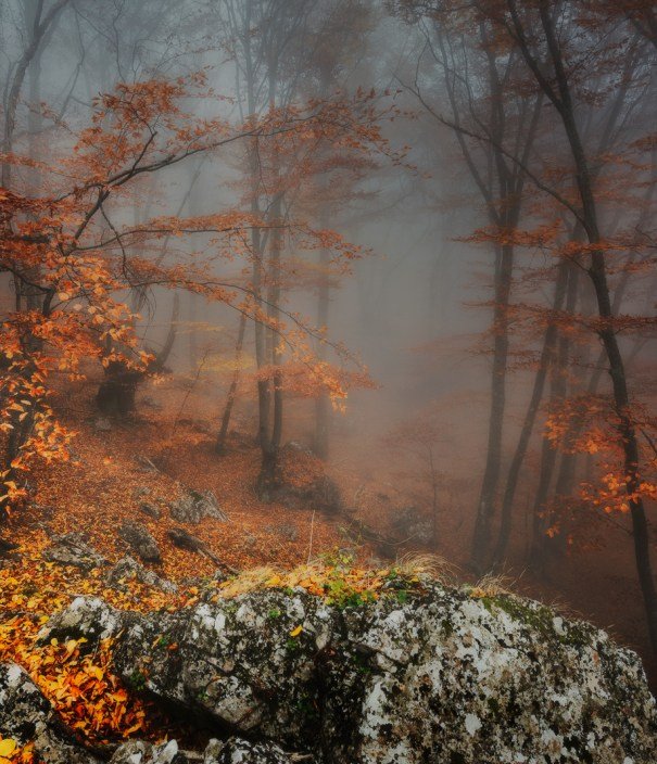 Optically aroused in the autumn wilderness by victor swan ufo optically aroused sciox Image collections
