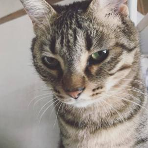 「Leer cat」の画像検索結果