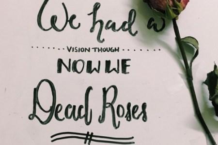 dead flowers lyrics » Best Poppy Flower   Poppy Flower