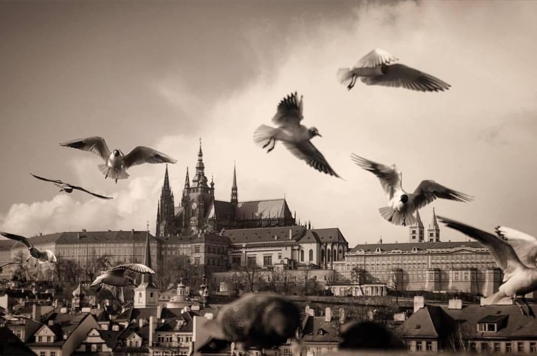 Prague Castle, 2007..#photooftheday #onephotoaday #photography #blackandwhite #blackandwhitephotography #bwphotography #swfotografie #blackandwhitephoto #monochrome #streetphotography #reportage #streetphotography #architecture #architecturephotography #praha #prague #prag #czechrepublic #praguecastle #doves (hier: Prague Castle)