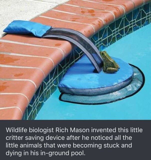 awesomacious Critter Pool Ramp – Humor