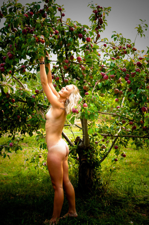 *How Bout Dem Apples?*