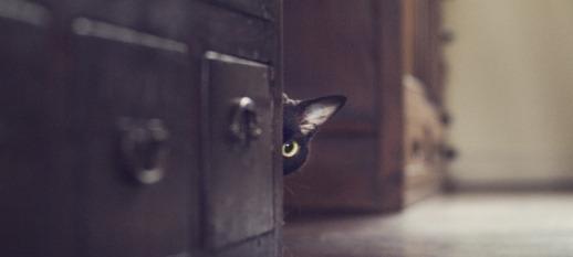 Schwarze Katze hinter dem Schrank