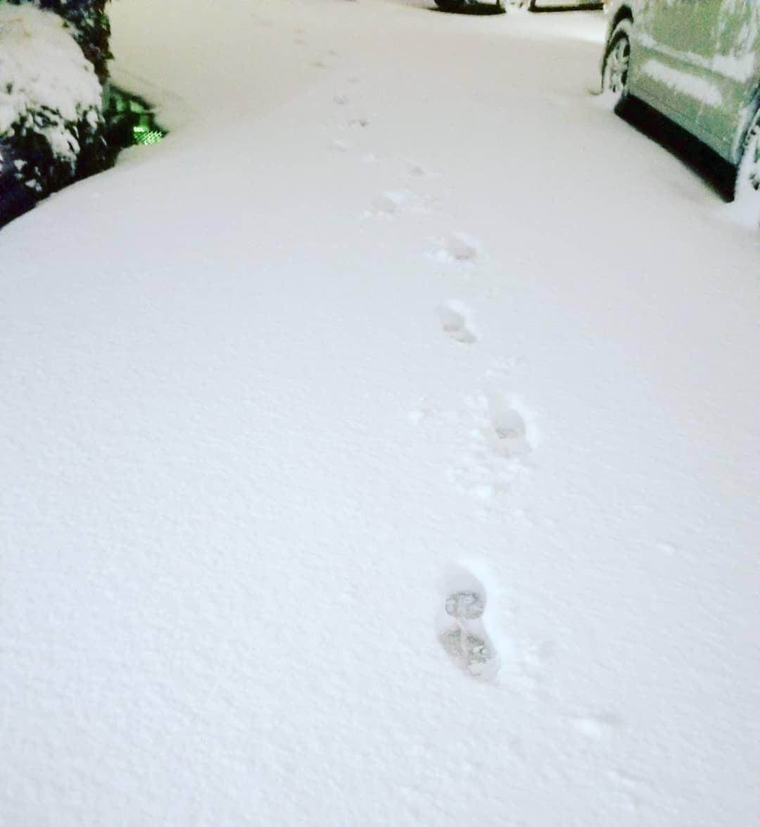 全然気付いてなかったけど、千葉県北西部でも雪ヤバいのね。