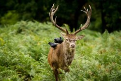 """megarah-moon:  """"Stag and Crows"""" by Michael Rammell"""