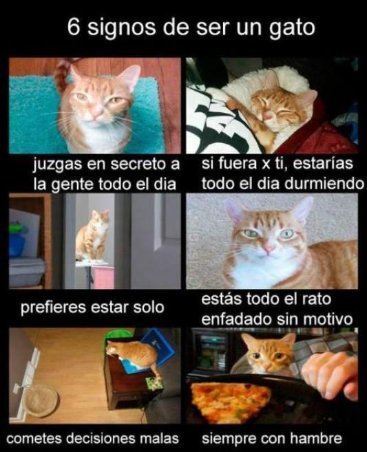 ¿Cómo saber si eres un gato?