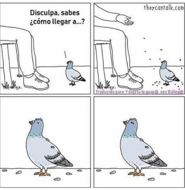 Palomas, esas incomprendidas