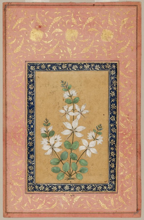 heaveninawildflower:'A Flowering Plant' (17th century). Watercolour and gold. Indian, Mughal.Image and text courtesy MFA Boston.