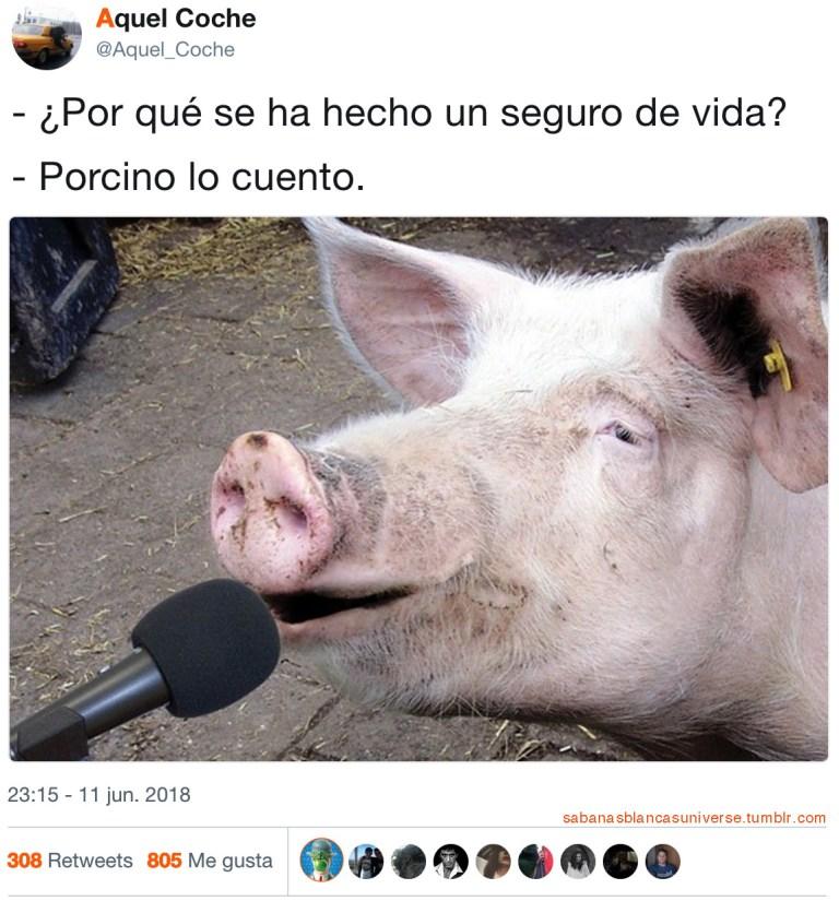 Humor porcino