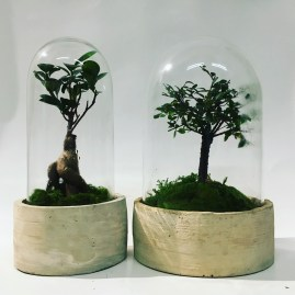 Small #bonsaiterrarium vs big #bonsai #terrarium 💚💦🌿💚