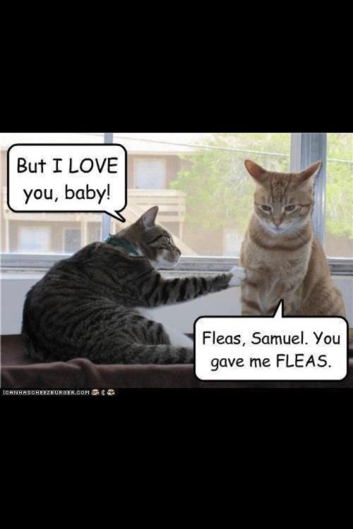Cat Jokes On Tumblr