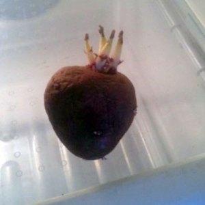 sacred-heart-potato