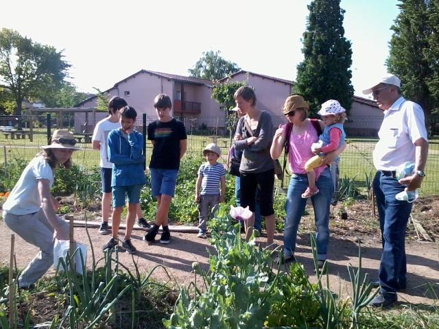 Fraise aux jardins partagés