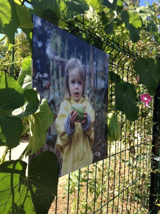 art jardin (3)