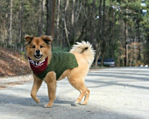 Runaway Dogs are no match for a well trained dog walker