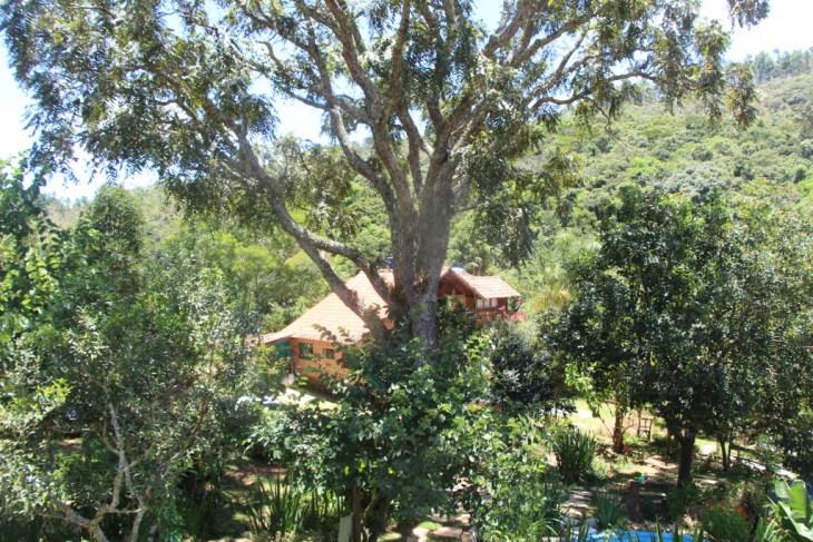 Cedro de 120 anos no jardim da pousada