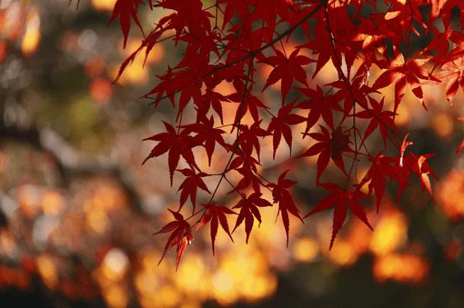 興正寺06