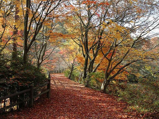 森林植物園top