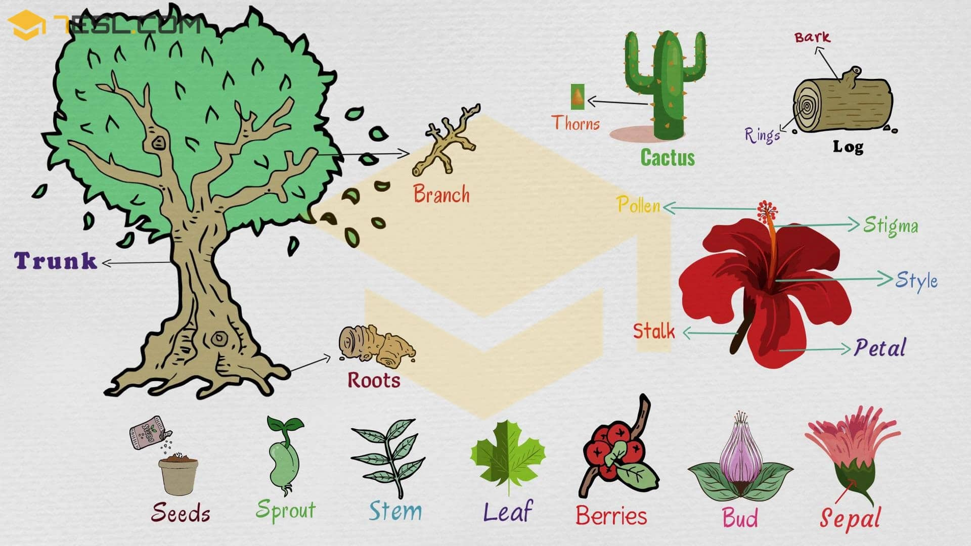 Parts Of A Plant Useful Plant Parts In English With