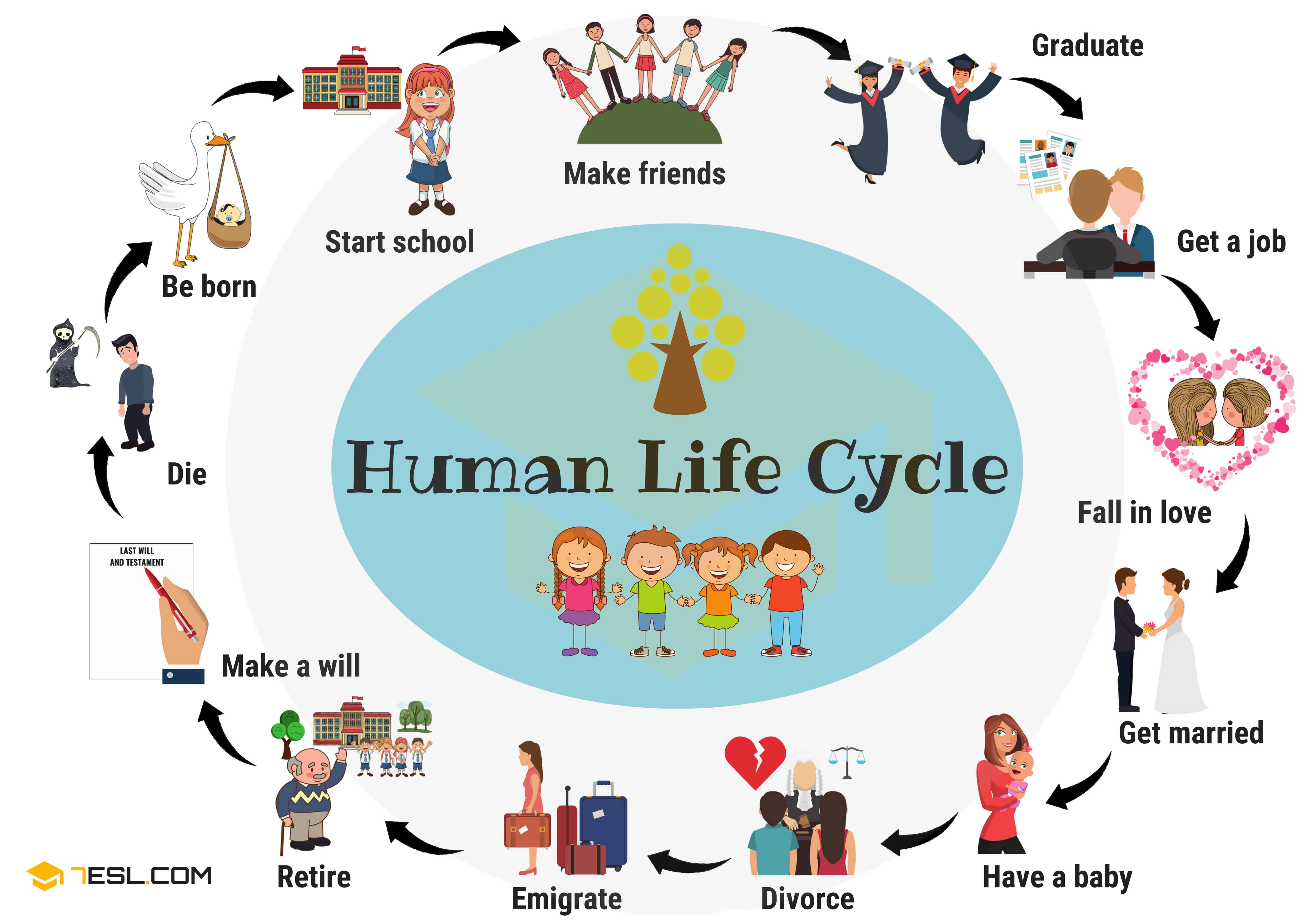 Human Life Cycle Useful Stages Of Life With Pictures
