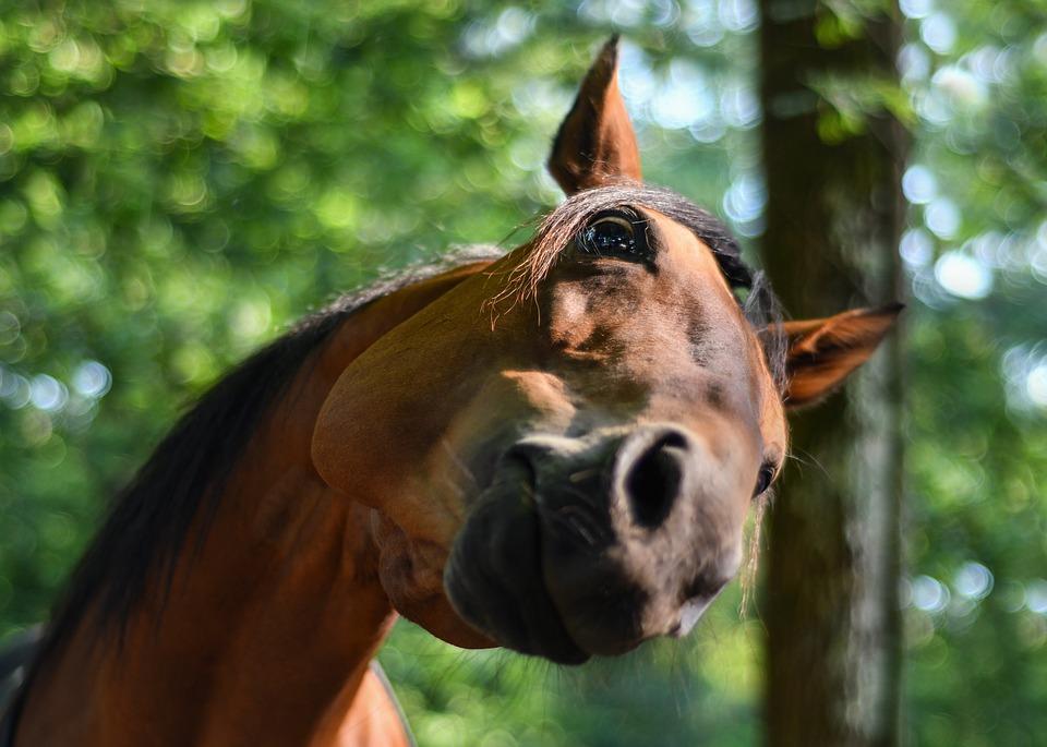 Три подростка погибли в ДТП с участием табуна лошадей в Башкирии