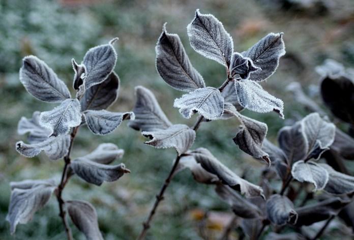 До -2 градусов ожидается в ночь на вторник в Рязанской области