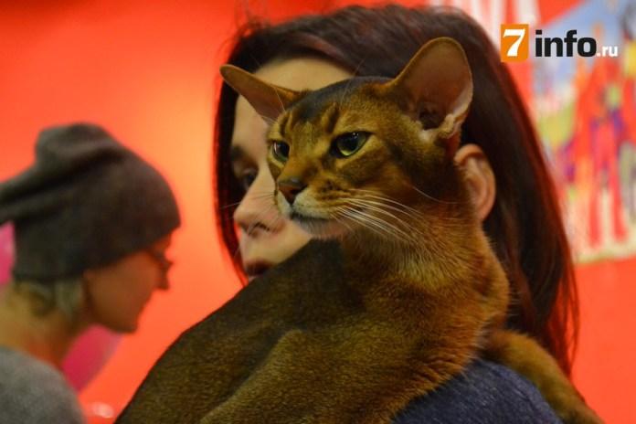 В Рязань привезли редкие породы кошек