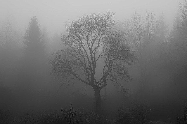 МЧС предупредило рязанцев о тумане и сильном ветре