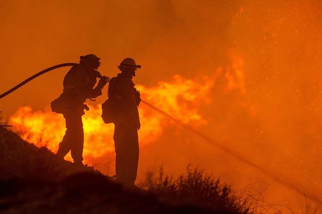 Активисты сообщили о четырёх новых поджогах леса под Рязанью